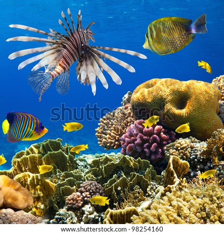Photo of a coral colony on a reef - stock photo