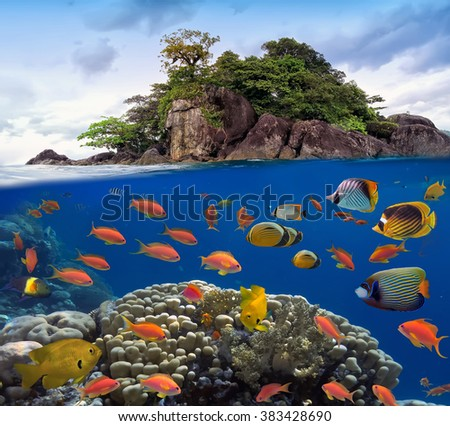 Photo of a coral colony on a reef top. Red Sea, Egypt - stock photo