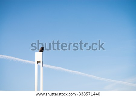 Photo of a crow looking in the direction of an aeroplane trail. - stock photo
