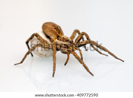 Photo of a giant and dangerous  spider - stock photo