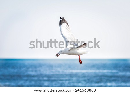Photo of a gray and white Seagull - stock photo