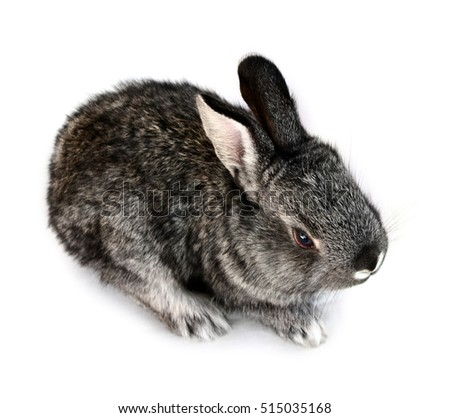 Photo of a gray small rabbit isolated on a white background