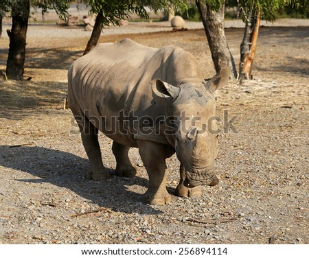 Photo of a large rhinoceros in the park - stock photo