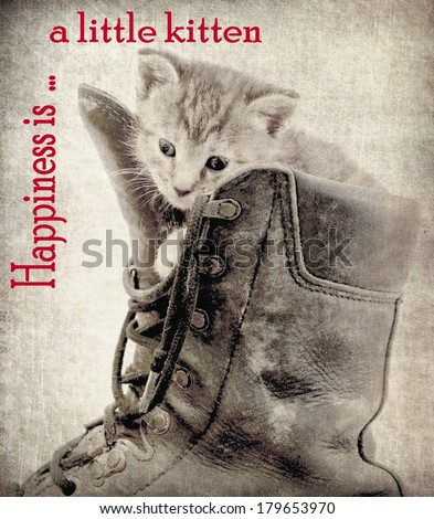 Photo of a little kitten processed with a old vintage grungy look . Attached the words ; Happiness is a little kitten  - stock photo