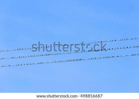 Photo of a lot of birds on cables.