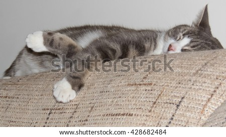 Photo of a pet cat lounging on the settee - stock photo
