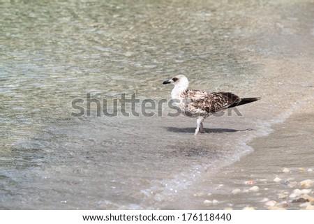 Photo of a seagull at the coastline - stock photo