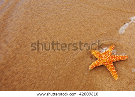 photo of a starfish washed out of the ocean - stock photo