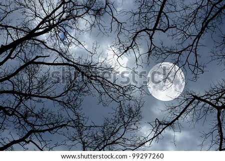 Photo of a the Moon, night and winter tree - stock photo