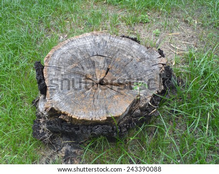 photo of a tree stump - stock photo