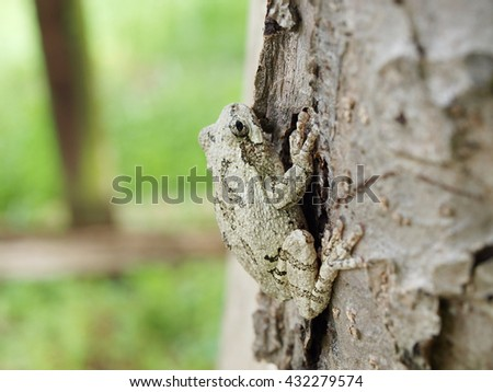 photo of a Treefrog clinging on a tree - stock photo