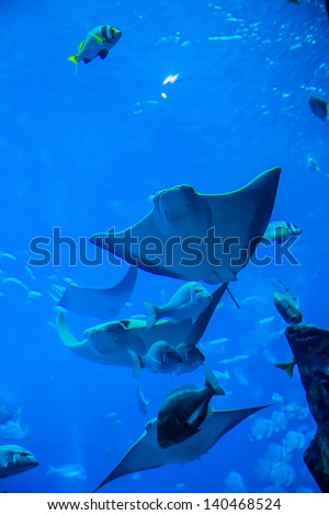 Photo of a tropical fish on a coral reef in Dubai aquarium. Stingray fish