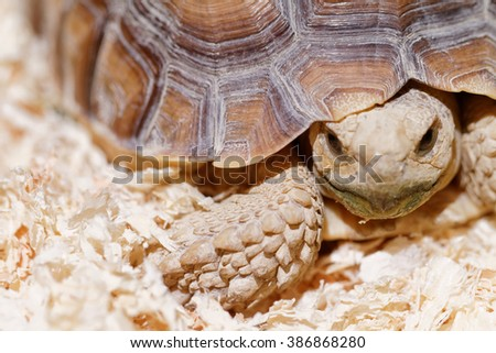 Photo of a turtle crawling on his terrarium  - stock photo