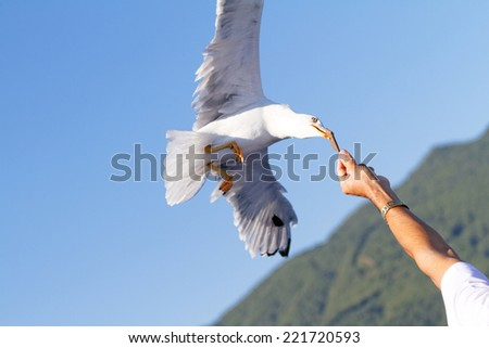 Photo of a white seagull when fly