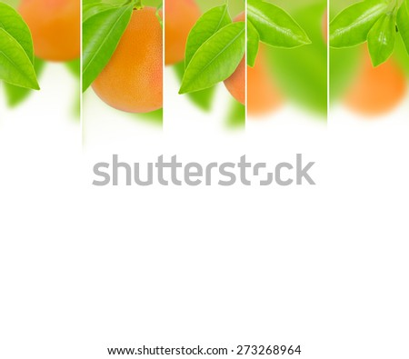 Photo of abstract grapefruit mix with white space for text - stock photo