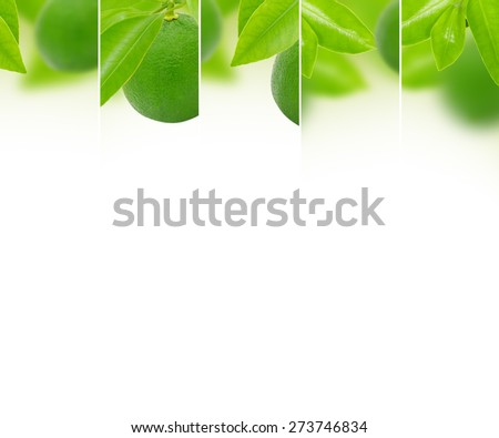 Photo of abstract lime mix with white space for text - stock photo