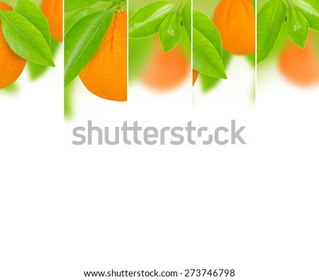 Photo of abstract orange mix with white space for text - stock photo