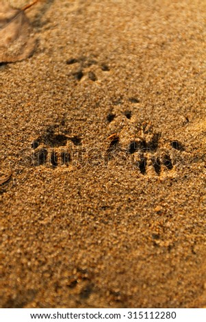 Photo of an animal foot print on the sand - stock photo