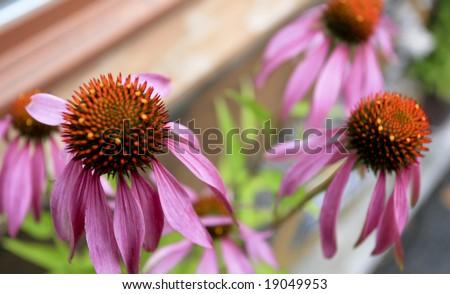 Photo of an assortment of summer flowers (taken in Switzerland). - stock photo