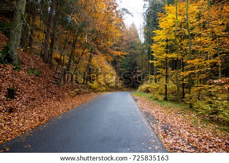 Photo of autumn trees with colorful leaves and asphalt road