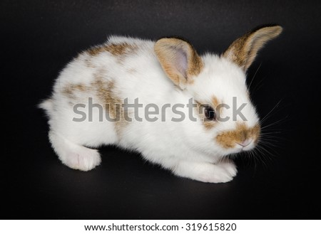 Photo of baby bunny isolated on black background