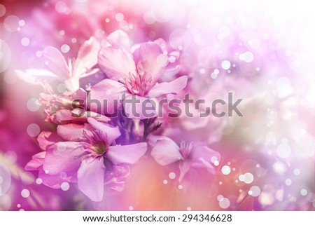 Photo of beautiful bright pink blossom, abstract natural background, fine art, spring time season, pink blooming in sunny day, floral wallpaper, soft focus, little pink flowers on tree branch. - stock photo
