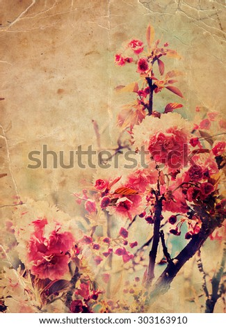 Photo of beautiful bright pink cherry blossom, abstract natural background, spring time season, pink blooming in sunny day, floral wallpaper, soft focus, little pink flowers on tree branch. - stock photo