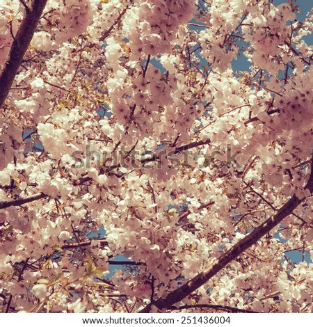 Photo of beautiful cherry blossom, abstract natural background, fine art, spring time season, apple blooming in sunny day, floral wallpaper, soft focus, little white flowers on tree branch - stock photo