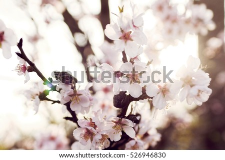 Photo of beautiful flowering tree in spring