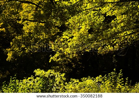 Photo of beautiful sun-illuminated autumn forest with bright yellow-green leaves heavy foliage on branches of trees on seasonal woodland landscape background, horizontal picture