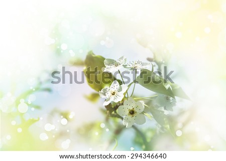 Photo of beautiful white tree blossom, abstract natural background, fine art, spring time season, cherry blooming in sunny day, floral wallpaper, soft focus, little pink flowers on tree branch. - stock photo