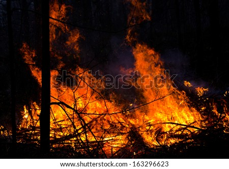 Photo of big flame in night forest
