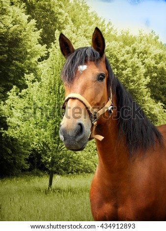 Photo of brown horse with green trees in background