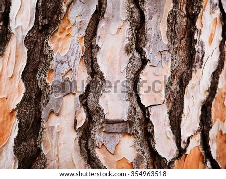 photo of close up of pine tree bark - stock photo