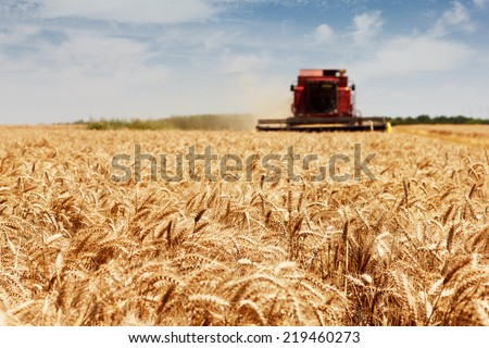 Photo of combine harvester that is harvesting wheat with dust straw in the air.