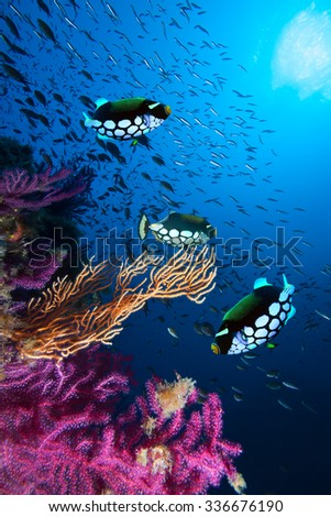 Photo of coral colony - stock photo