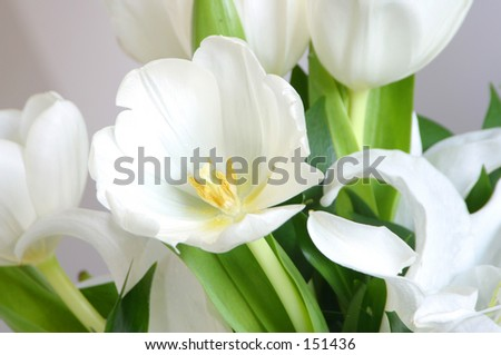 Photo of crisp white flowers.