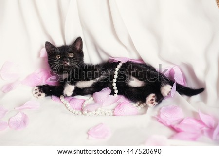 photo of cute black kitten with pearl and rose petals  - stock photo