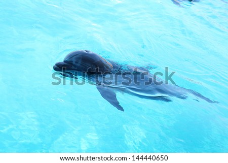 Photo of cute dolphin swimming in the pool.