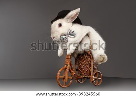 Photo of cute rabbit with top hat and bow riding bike. Isolated on dark background