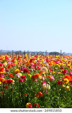 photo of field of flowers. selective focus