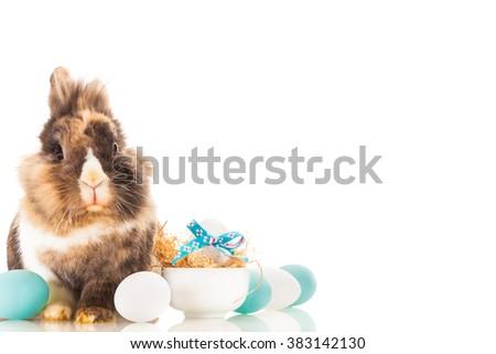 Photo of fluffy funny rabbit over white isolated background - stock photo