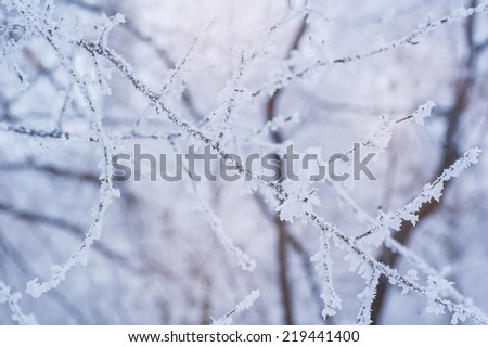 Photo of frozen fir tree background, branches of evergreen tree covered rime, twigs of spruce covered by hoar in the forest, snowy wintertime season, beautiful Christmas greeting card, xmas holiday  - stock photo
