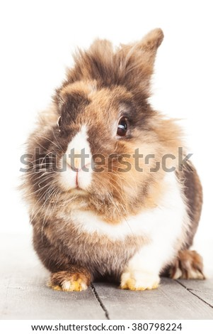 Photo of funny fluffy rabit over white islolated background