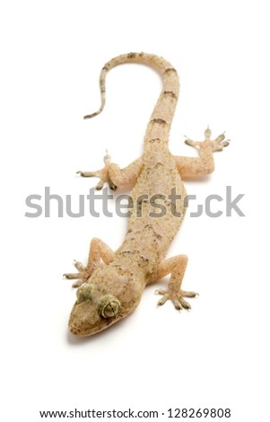 Photo of Gecko - stock photo
