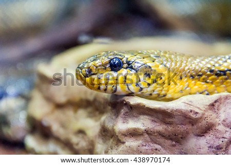 Photo of grass snake close up in zoo - stock photo