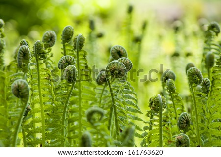 Photo of green fern growing in forest - stock photo