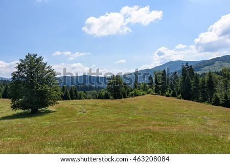 Photo of green forest and peaks in brasov mountains in the morning, Romania.