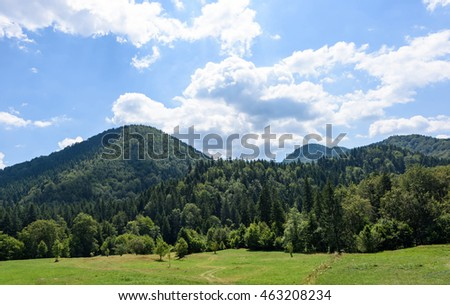Photo of green forest in brasov mountains in the morning, Romania.
