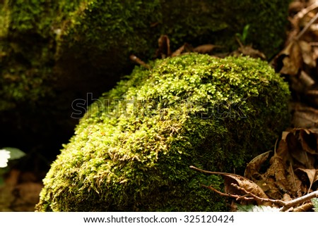 Photo of green moss in the forest  - stock photo